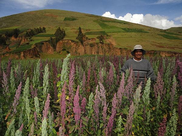un-producteur-de-quinoa-dans-son-champ-saldac
