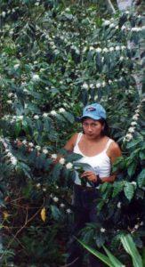jenny-avec-une-plante-en-fleur-saldac