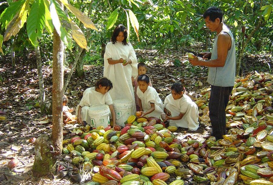 Producteurs en famille pendant la récolte
