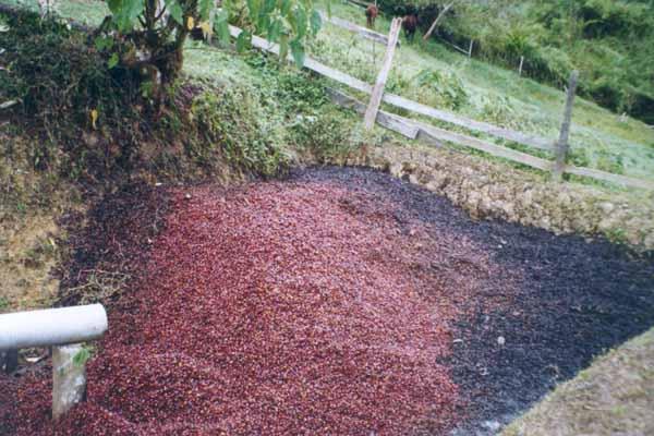 production-ecologique-pulp-comme-engrais-organique