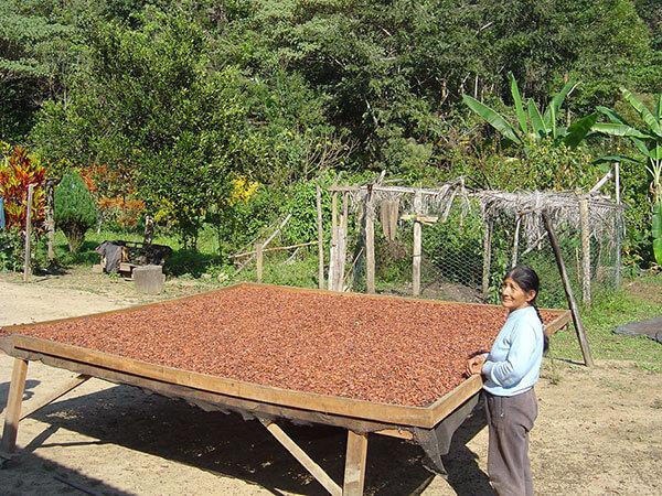 sechage-du-cacao-sur-des-tamis-saldac