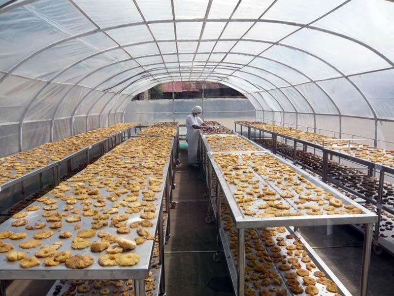 sechoir-solaire-production-d-ananas-saldac-2