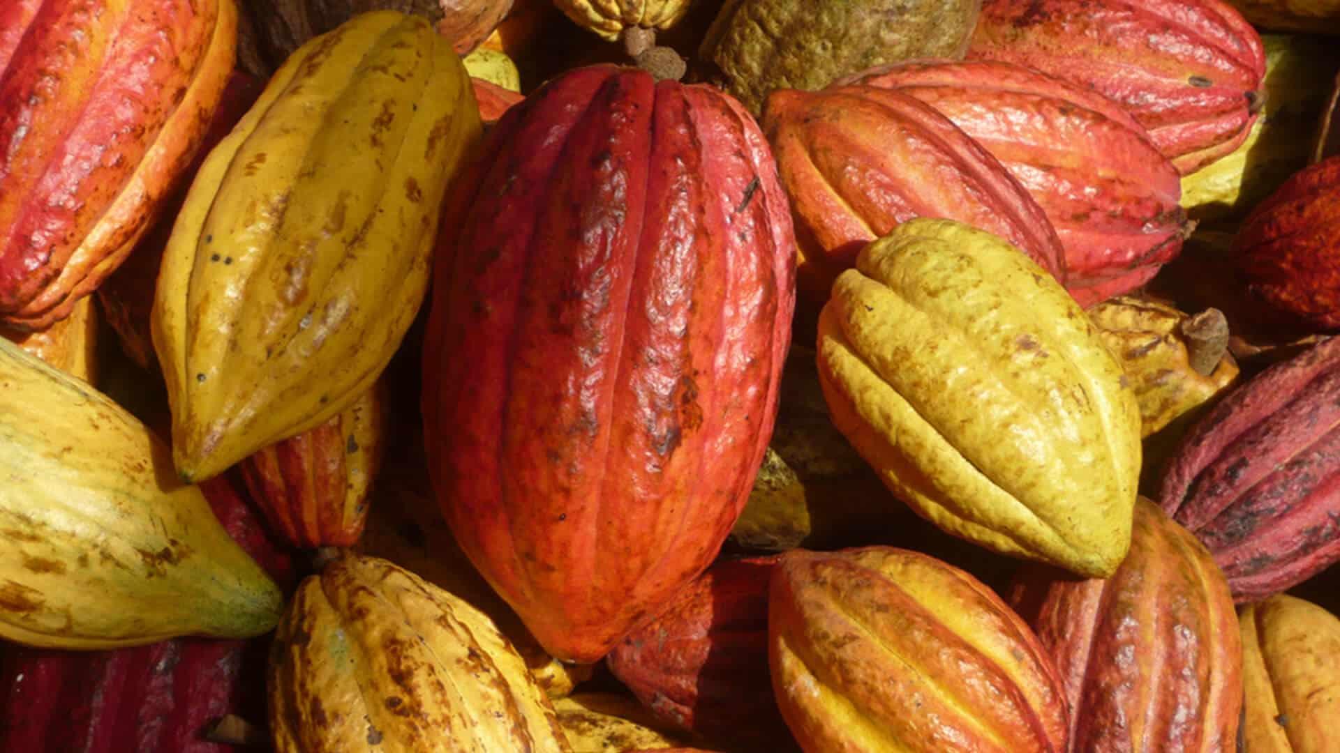 Cacao importé par SALDAC